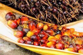 Recomiendan consumir aceite de palma «muy ocasionalmente y de forma moderada»