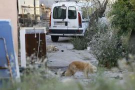 Fallece una pareja de ancianos en Llucmajor y sus perros les devoran