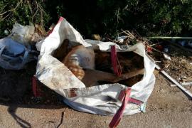 Hallan dos gamos muertos en un saco en un camino rural de Inca