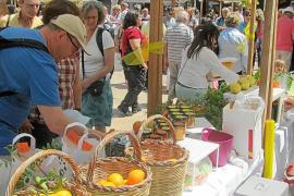 Llega la Fira de la Taronja de Sóller en plena renovación de huertos