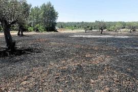 Una quema descontrolada arrasa 6.000 m2 de terreno en Sant Llorenç