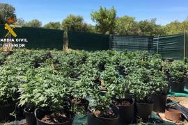 La Guardia Civil desmantela una plantación de marihuana en Porreres