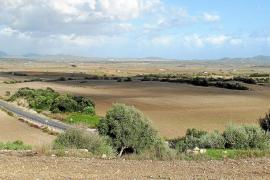 Vilafranca preserva la zona agrícola del Pla d'Alanzell para conservar su biodiversidad