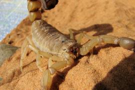 Un escorpión pica a una mujer en pleno vuelo de México a EEUU