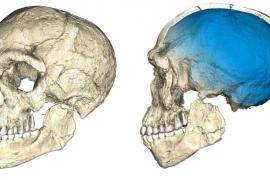 Hallados en Marruecos los restos del homo sapiens más antiguo del mundo