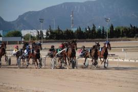 La Federación de Trote abonará los premios de carrera de caballos en Mallorca