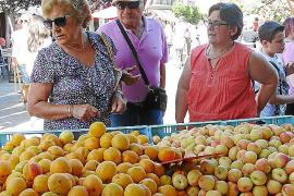 Albaricoques con sabor y tradición en Porreres