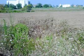 El Ajuntament creará 13 hectáreas más de suelo urbano en el Moll