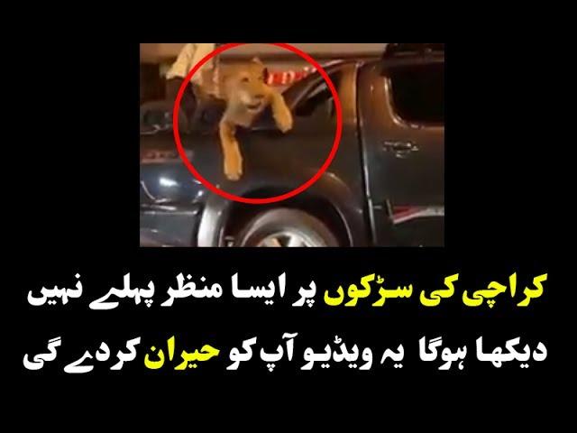 Detenido por pasearse con un león en la parte trasera de su camioneta