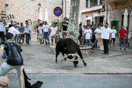 La nueva ley solo permitirá el Correbou de Fornalutx en un recinto y sin atar al toro
