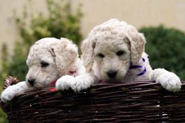 Perros en Baleares
