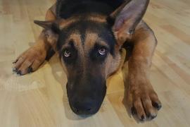 ¿Cómo evitar que tu perro se muera de miedo por San Juan?