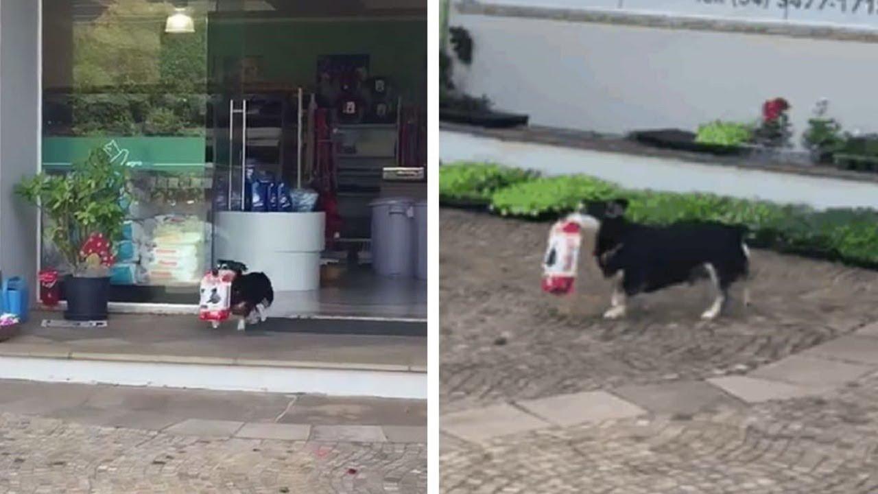 Pituco, la estrella canina viral que recoge su comida por sí mismo