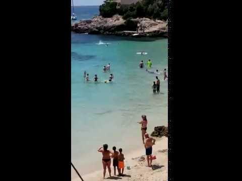 Una tintorera provoca pánico entre los bañistas de la playa de Illetes