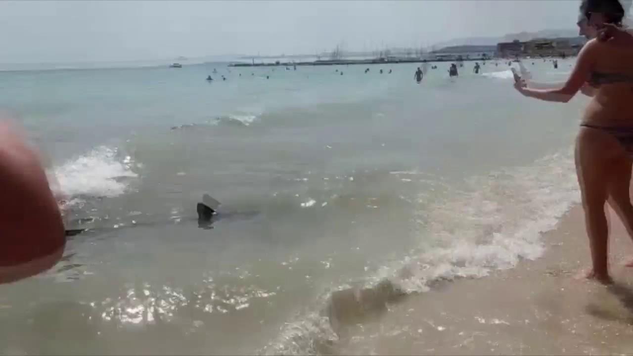 Desalojan la playa de Can Pastilla por la presencia de un tiburón