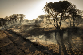 Controlado el incendio forestal en el entorno de Doñana