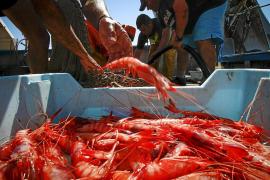 Las capturas de gamba roja superan ya en 5 toneladas a las de toda la temporada pasada