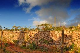 El vi de la Serra