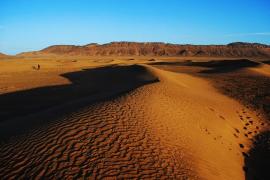 «Enfado real» del rey de Marruecos con catorce gendarmes a los que ha desterrado al Sáhara Occidental