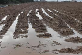 Los agricultores ya pueden solicitar las ayudas para compensar las pérdidas por las inundaciones