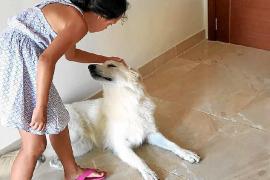 «Mi perro no está abandonado, tiene hasta aire acondicionado en un cuarto»
