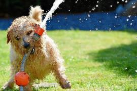 Consejos para que las mascotas no sufran en verano