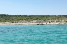 GOB denuncia los paseos con caballos en las dunas de Sa Canova de Artà