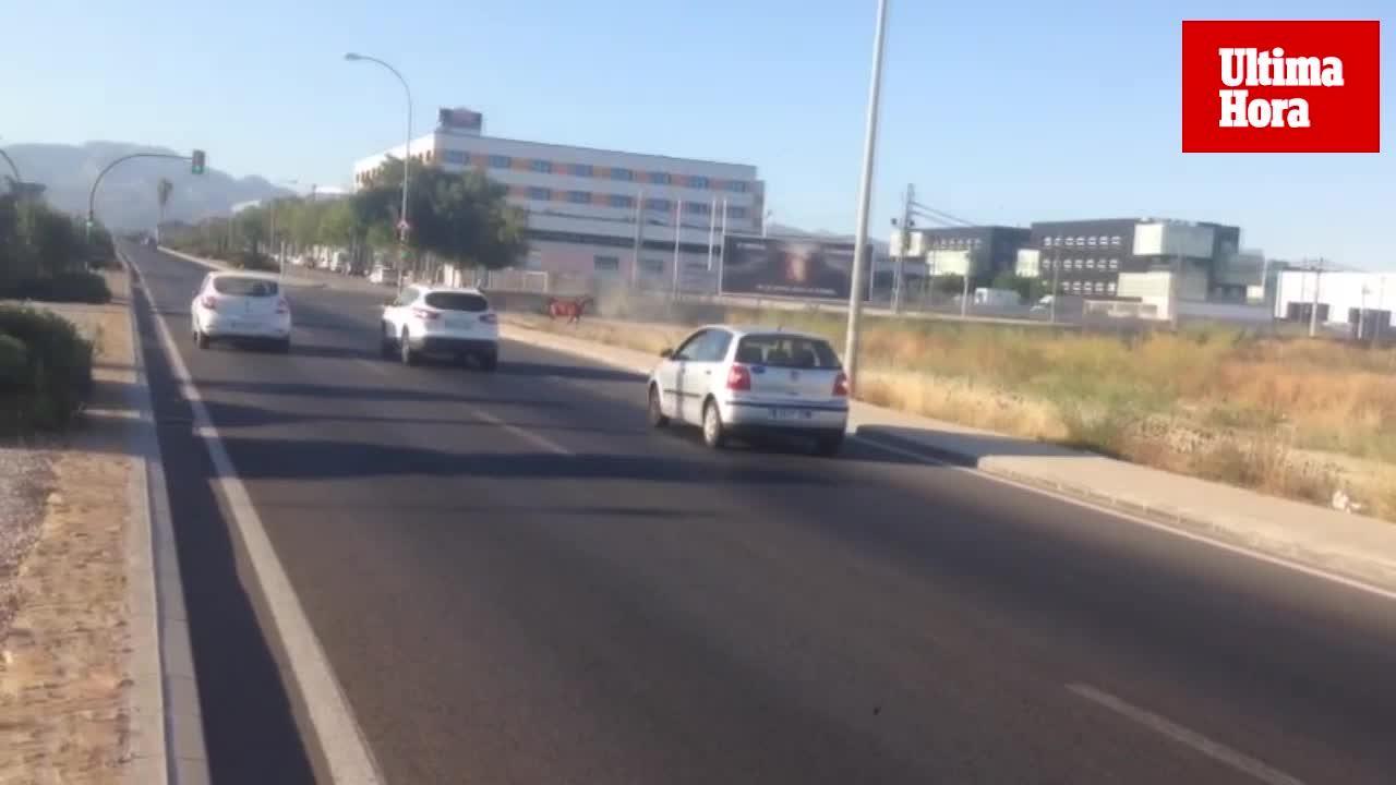 Una yegua desbocada provoca la sorpresa de los conductores en la carretera de Sóller