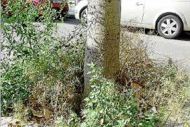 Emaya reconoce que no hay personal para retirar las malas hierbas de Palma