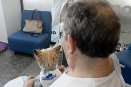 León, la primera mascota en entrar al Hospital Can Misses