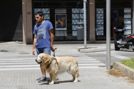 Un perro guía salva a su dueño de ser atropellado por un coche en Palma