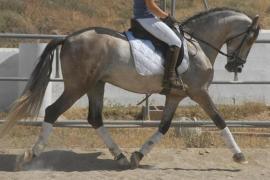 Muere una mujer pisada por el caballo que montaba tras caer al desbocarse
