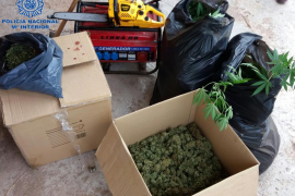 Desmantelan una plantación e incautan cuatro kilos de marihuana en Llubí