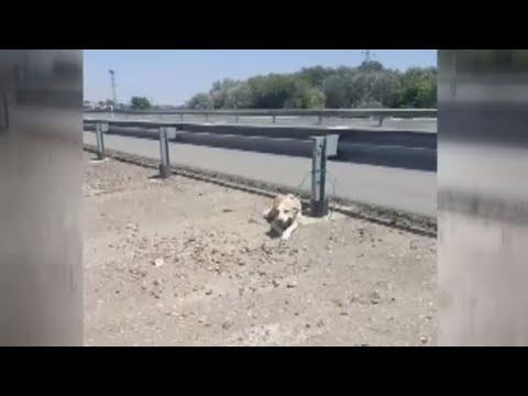 Abandonan a una perra en una carretera a 40 grados