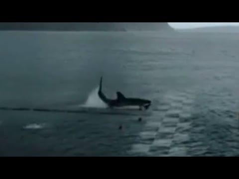 Michael Phelps, a dos segundos de batir en una carrera al gran tiburón blanco
