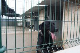 Una asociación de Mallorca inicia una campaña de crowdfunding para construir un refugio de animales abandonados