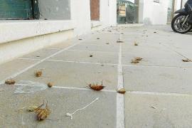 Cort doblará el presupuesto para combatir cucarachas y otras plagas