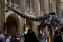 Un niño de diez años corrige un error en un rótulo del Museo de Historia Natural de Londres