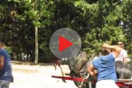 PACMA denuncia el «maltrato a los caballos» en el tiro y arrastre
