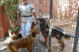 El Refugio denuncia «presiones» y dejará de recoger más perros para el Ajuntament