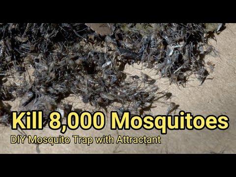 Cómo deshacerse de 8.000 mosquitos en dos noches