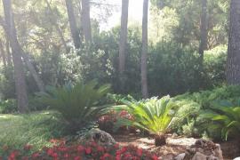 Rajoy ya está en Palma, sigue su llegada a Marivent