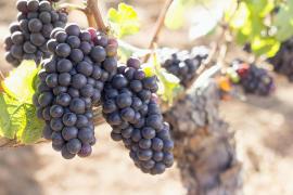 Govern y El Corte Inglés convocan un concurso de fotografía para promocionar el vino de Baleares