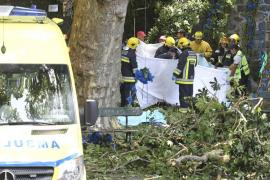 La caída de un árbol deja 13 muertos y 35 heridos en Madeira