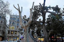 El resultado de una poda de árboles en la Plaça del Mercat.