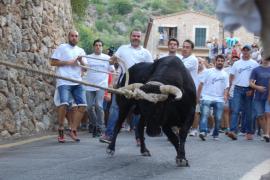 Fornalutx celebrará el próximo jueves su primer 'correbou' sin cuerdas en los cuernos del toro ni sacrificio