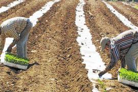Asaja denuncia retrasos de cinco meses en aprobar ayudas agrícolas