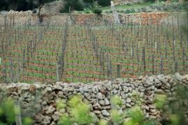 Canarias y Baleares lideran el precio de exportación de vino en el primer semestre