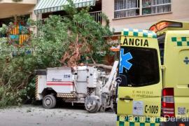 Herido un obrero al caerle encima un árbol en la calle Niceto Alcalá Zamora de Palma