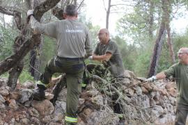Habilitan un área recreativa en Son Orlandis para descongestionar la Serra de Tramuntana